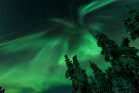 Winged Aurora